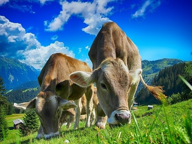 List of meat of commodities
