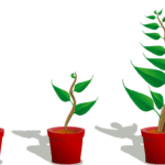 Growth Investing – A Beginners Guide